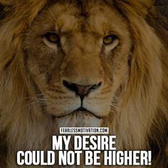 30 Motivational Lion Quotes In Pictures - The Best Lion Picture Quotes on Courage, Strength and determination to succeed. Lion Quotes, Animal Quotes, Tiger Quotes, Animals And Pets, Baby Animals, Funny Animals, Animal Paintings, Animal Drawings, Lion Meaning