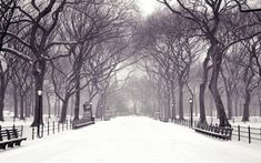 Exquisite Winter Wallpapers That Will Embellish Your Computer ...