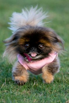 this is probably one of the cutest dogs ive ever seen!