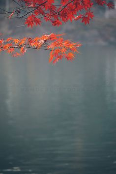 Autumn on the Han  - Photographic Print - fall, travel, Art, Wall, Hanging, Decor, Photography, asia, seoul, maple, leaf, asian, blue, red