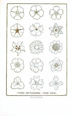 Botanical – Flower – Flower line drawings 2 | Vintage Printable at Swivelchair Media. This would make a great handout to go with the egg carton flowers.
