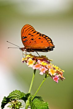 Pretty Butterfly on a Flower