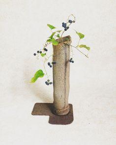#アオツヅラフジ #草もの盆栽  #bonsai #kusamono  #盆栽 #盆栽鉢
