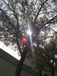 árbol en la ciudad