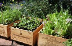 Trend Hochbeet: Tipps fürs Anlegen & die Gemüseaufzucht