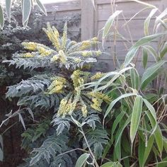 Create a breathtaking and exotic tropical plant filled garden that will survive the UK climate. Tropical Plants Uk, Small Tropical Gardens, Tropical Landscaping, Garden Border Plants, Garden Borders, Bamboo Plants, Large Plants, Balinese Garden, Planting