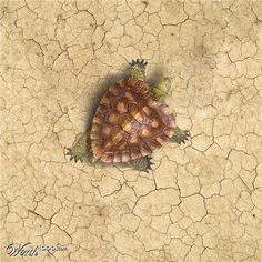 Heart tortoise art... ...