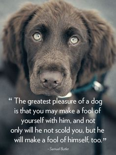 16 Dog Quotes That Will Melt Your Heart #Dogs