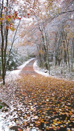 https://flic.kr/p/78MuCB | autumn snow in CT. | This was my driveway Oct. 15th- the earliest snowfall I can remember in my lifetime. It was crazy- leaves on the trees were still changing colors and just starting to fall. You can see I hadn't raked them up yet.