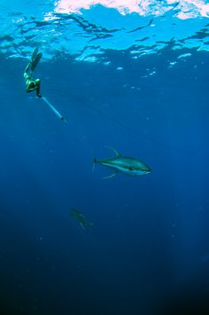 spearfishing heaven ascension