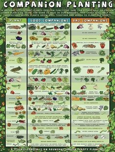Companion planting for your garden More