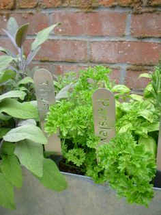 Stainless Steel Herb Planters  Parsley & Thyme