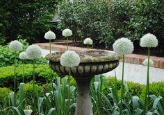Modern Country Style: Modern Country Garden Tour Click through for details. Moon Garden, Lush Garden, Balcony Garden, Dream Garden, Garden Plants, Garden Water, Annabelle Hydrangea, Formal Gardens, Outdoor Gardens