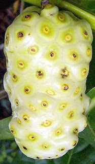 Learn about Morinda citrifolia (noni), noni fruit, noni juice and noni leaf tea and their health benefits. Fruit Plants, Fruit Garden, Fruit Trees, Fruit And Veg, Fruits And Vegetables, Fresh Fruit, Photo Fruit, Weird Fruit, Healthy Foods