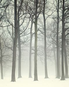 Winter Wonderland, Landscape Photography, Trees in Fog, Forest Photograph, Haunting, Wall Decor, Branches, Monochrome  - Ink and snow. $30.00, via Etsy.