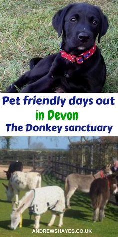 Andrewshayes Holiday Park have a list of Best East Devon Dog Pet Friendly PLACES to take your pet to. There is plenty for you and your Pet to do here. Cheap Days Out, Fun Days Out, Family Days Out, Uk Tourism, Dog Friendly Holidays, South Devon, Pet Dogs, Pets, Uk Holidays