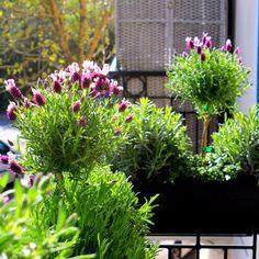 Jardini res fleuries livr es - Jardiniere etroite ...
