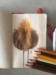 Ugly ugly bird  Pencil illustration