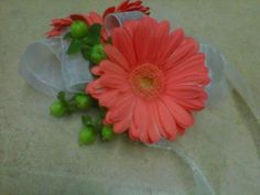 Wrist Corsage: Coral Gerbera Daisies and Green Hypericum Berries.