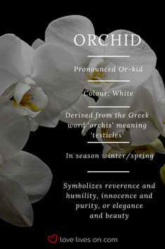 White orchid meaning. White orchids symbolize reverence & humility, innocence & purity or elegance Funeral Flower Arrangements, Funeral Flowers, Orchid Meaning, Meaning Of Flowers, Orchid Tattoo Meaning, Flower Meanings, Colour Meanings, Cheap Wedding Flowers, Colorful Succulents