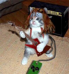 Curiosos e Engraçados: Imagens engracadas de gatos