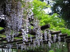 Would love a Wisteria Arbor in my backyard