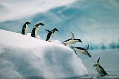 Penguins Jumping- Images to Paint