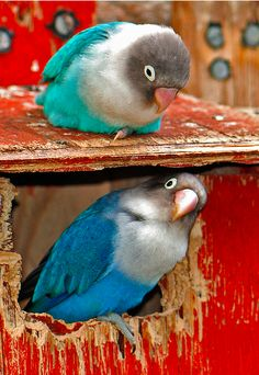 Expressive Bird Nests X 2 Breeding Nest Bird Box Bamboo Nest Canary Finch Budgie 5 X 3 Inch Pet Supplies