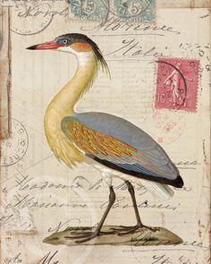 Heron Soleil Collage