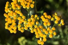 Beauty Hacks, Beauty Tips, Herbs, Plants, Magick, Beauty Tricks, Herb, Plant, Beauty Secrets
