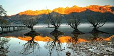 Those Willows - A morning with willows exactly after one year in the same spot at Glenorchy NZ