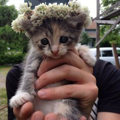 This pretty little girl with her fancy flower crown. | 39 Overly Adorable Kittens To Brighten Your Day
