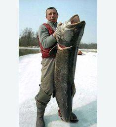 Ice fishing for taim