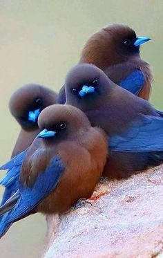 aves * - aves * Estás en el lugar correcto para receita portuguesas Aquí presentamos receita que está busc - Cute Birds, Pretty Birds, Beautiful Birds, Animals Beautiful, Funny Birds, Beautiful Pictures, Birds 2, Small Birds, Nature Animals