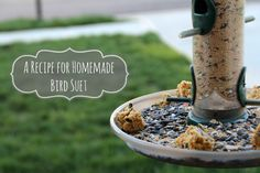 Homemade Bird Suet Recipe