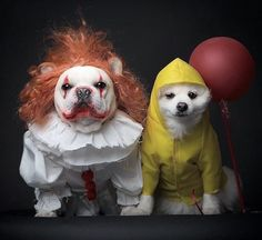 Let your dog join in on the fun of Halloween with a fun costume. Here are some awesome ideas for when you take your dog trick or treating! Bulldog Halloween Costumes, Best Dog Costumes, Pet Costumes For Dogs, Cute Costumes, Halloween Costume With Dog, Costume Ideas, Halloween Week, Cute Funny Animals, Cute Dogs