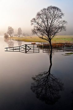 Tree and Fence by Jason Connoly #reflection