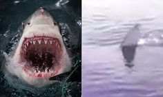 Just when you thought it was safe to go back in the water: watch the moment Italian fishermen spotted 'great white shark' headed straight for their boat. See this & more at: http://twodaysnewstand.weebly.com/mail-onlinecom
