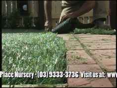 A DIY GUIDE FOR ARTIFICIAL TURF FAKE GRASS INSTALLATION GUIDE. PALM PLACE NURSERY HAS BROKEN IT DOWN INTO SIMPLE STEPS ON HOW TO SAVE YOU MONEY BY INSTALLING YOUR OWN TURF. VERY SIMPLE & EASY METHOD, FOLLOW THIS INSTALLTION PROCESS TO GUIDE YOU ON DOING IT YOURSELF.