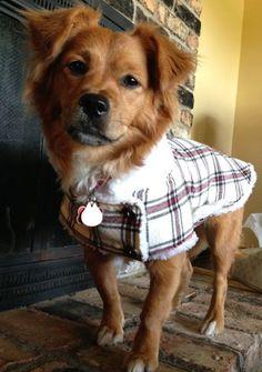 Custom Dog Coat by KoveredUp on Etsy