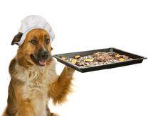 Leckere Rezepte für Hundekekse. Die Hundekekse sind von Hunden getestet und für gut befunden worden.