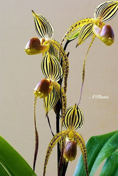 Orquídeas - Orchids - Community - Google+