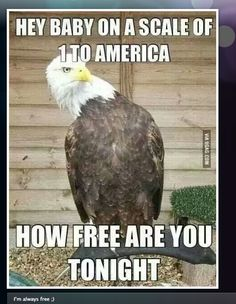 """Can't spell """"u patriotic"""" without """"u"""" and """"i."""" 