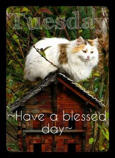 cat house Cats are a mysterious kind of folk. Pretty Cats, Beautiful Cats, Pretty Kitty, Beautiful Gorgeous, Crazy Cat Lady, Crazy Cats, Gato Calico, Calico Cats, Chat Maine Coon
