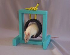 Tire Dog Toy Rat Agility Jump - PetDIYs.com