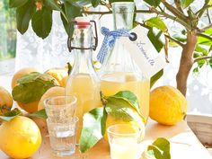 Selbst gemachter Limoncello