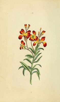 Flora and Thalia; or, Gems of flowers and poetry: being an alphabetical arrangement of flowers, with appropriate poetical illustrations, embellished with coloured plates. By a lady. To which is added, a botanical description of the various parts of a flower, and the dial of flowers...   Philadelphia,Carey, Lea, and Blanchard,1836.