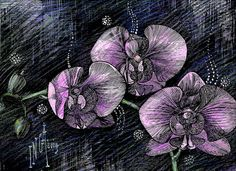 Night Orchids