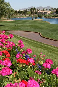 Superstition Springs Golf course - arizona