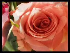 one more hope again - instrumental - YouTube Instrumental, Youtube, Rose, Music, Flowers, Plants, Musica, Pink, Musik